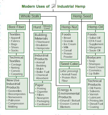 Usos da planta de cânhamo em sua integridade