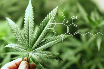 CBD medicinal