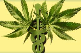 ONU tira cannabis das drogas mais perigosas