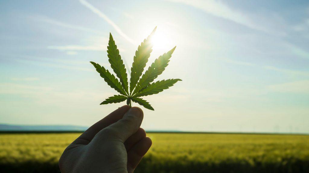legalização e descriminalização da maconha