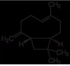 Cariofileno