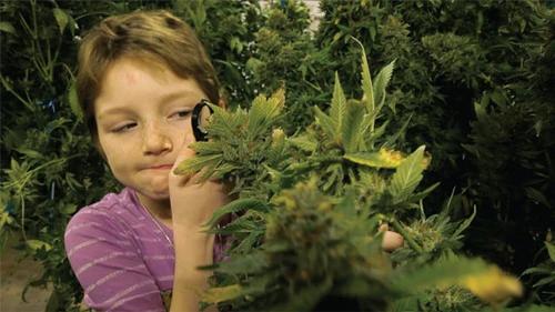 Cannabis para Autismo Infantil