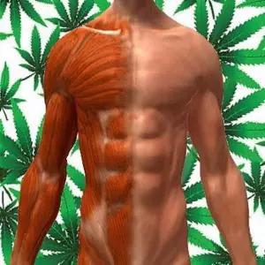 Espamos musculares e cannabis medicinal