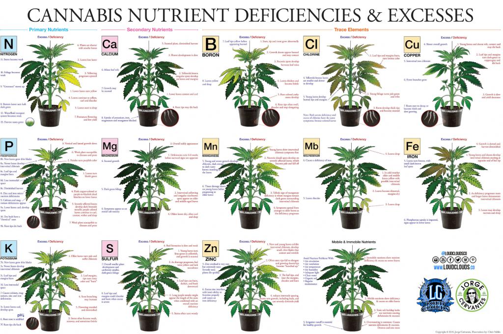 Guia de Deficiência Nutricional Cannabis