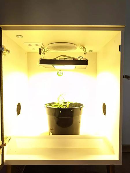 iluminação growroom
