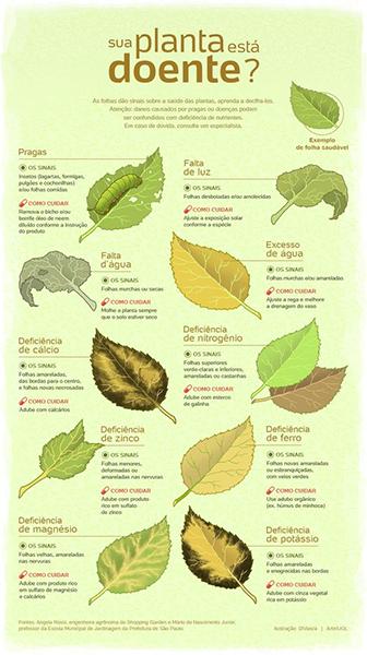 deficiência folhas cannabis