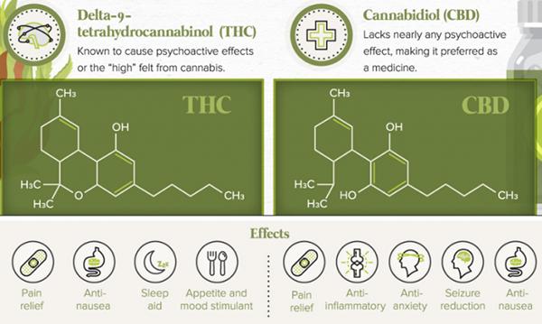 THC e CBD