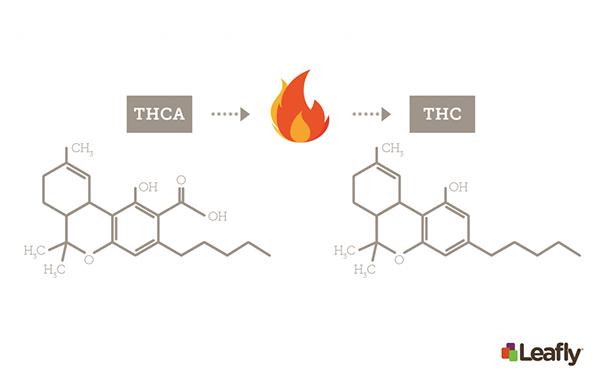 processo químico da descarboxilação