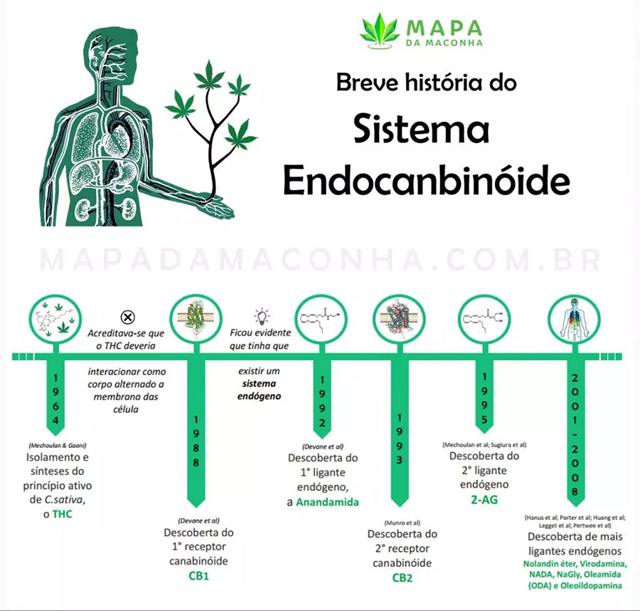 sistema-endocanabinoide-timeline
