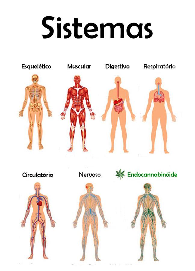 sistemas-do-nosso-organismo-2